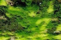 扁平苔藓的形成与哪些因素有关呢