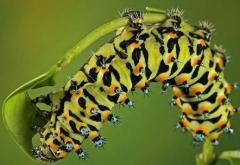 毛虫皮炎形成的症状表现特点当全面认识的相关图片