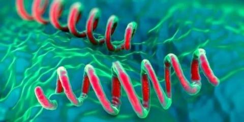 硬下疳是一期梅毒的标志吗